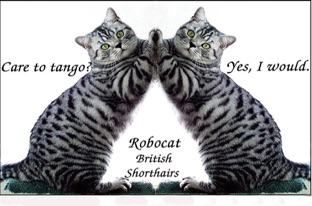 british silver spotted cat